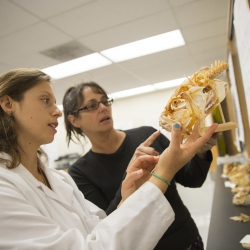 two people looking at an animal skeleton